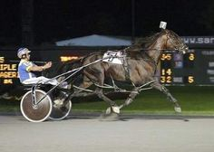 Mobile Web - News - Harness Racing: New class to be enshrined