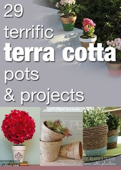 29 terrific terra cotta pots & projects