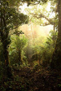 Costa Rica Monte Verde Cloud Forrest by dotpitch, via Flickr