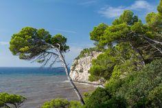 Menorca, Pine Tree, Trees, Water, Outdoor, Gripe Water, Outdoors, Pine, Tree Structure