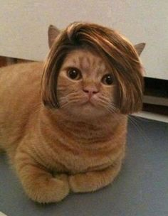 Bob Cat. P.S Don't worry its not real hair;)
