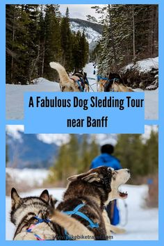 A Dog Sledding tour near Banff you'll want to do #dogsledding #Banff #Canmore #adventure