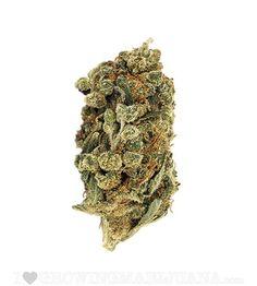 sensationelis: Superskunkhttp://goo.gl/4noavd Marijuana News