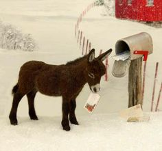Good donkey now bring me the mail