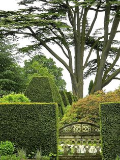 Well-clipped yew topiary - the King of the hedges.