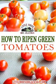 This little post about how to ripen green tomatoes is for ANYONE who has a load of green tomatoes at the end of summer. The good news is that you can STILL enjoy them! All those green tomatoes that didn't ripen on the vine are still good tomatoes! Keep them and have ripe ones for weeks, if not months!   Little House Big Alaska @littlehousebigalaska #tomatoes #greentomatoes #howtoripentomatoes #preserving tomatoes #gardening #summerrecipes #littlehousebigalaska How To Ripen Tomatoes, Ripen Green Tomatoes, Preserving Tomatoes, Summer Recipes, Great Recipes, Blt Pasta Salads, Healty Dinner, Whole Food Diet, Whats For Lunch