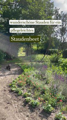 Alchemilla Mollis, Achillea, Garden Whimsy, Shade Perennials, Gardening, Garden Projects, Backyard Landscaping, Landscape Design, Flowers