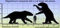 Descripción de un Megatherium