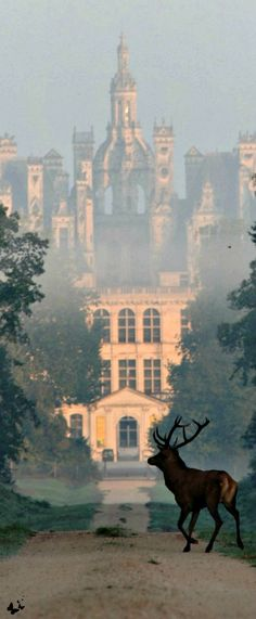 My favorite chateau! Never got to see this view though.....Traveling - Chateau de Chambord, France