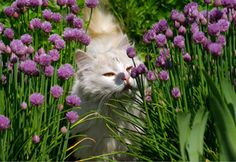 Plants which are toxic to cats