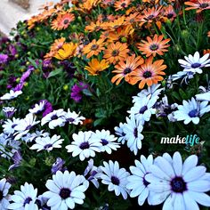8 perfect flowers for my balcony for only 16 euros Move Mountains, Horticulture, Cardiff, Balcony, Flower Arrangements, Home And Garden, Exterior, Nature, Flowers