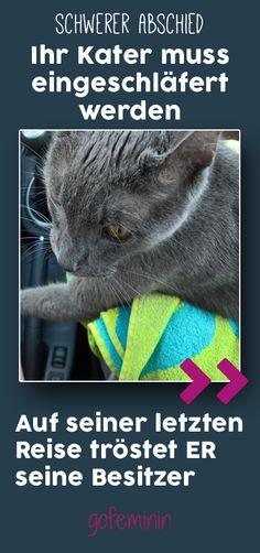 Auf seiner letzten Fahrt zum Tierarzt, verabschiedet sich dieser Kater rührend von seinen Besitzern.