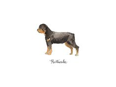 Rottweiler by Megan Kelso for Minted