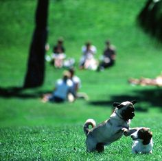 Dog friendly moments in Dolores Park #wanderingsole
