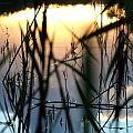 Lago e piante palustri.  #veduta #lago #canneto #natura #relax #relais #attivita #ariaaperta #piante #natura #tramonto  #barca #starbene #benessere #toscana