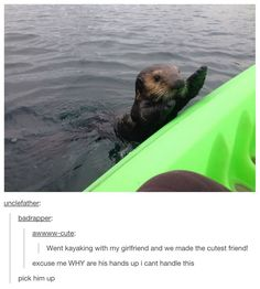 Otters! This reminds me of finding dory!