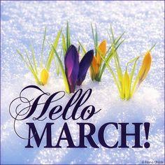 Hello! March!