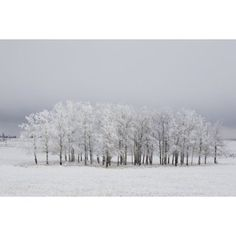 Calgary Alberta Canada Trees Covered In Frost In A Field Canvas Art - Michael Interisano Design Pics (19 x 12)