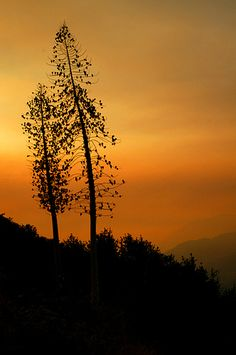 Wildfire smoke and trees near Clear Creek, Angeles National Forest, CA