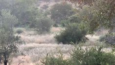 YouTube Hyena, All Inclusive Resorts, Safari, Africa, Country Roads, Explore, Youtube, Photography, Life