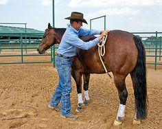 Training Tip of the Week: Hard-to-catch horse tip: Use the halter as a desensitizing tool.