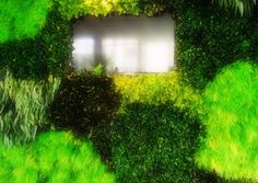 Green wall Lifestyle Photography, City Photo, Wall, Green, Green Wall Color, Walls