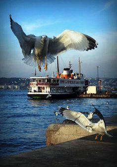 ISTANBULLLL - , Istanbul