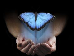 Photo about Male hands cupped emerging from a black background with a large blue butterfly rising up with copy space above. Image of above, copy, male - 79171915 Butterfly Images, Blue Butterfly, The Power Path, The Long Dark, Old Soul, Dark Night, Don't Give Up, Black Backgrounds, The Darkest