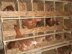 Chicken Coops, Nest Boxes And Fresh Eggs