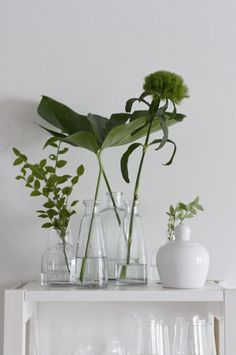 fresh white and forest green. Indoor plants and cactus. An assortment of different house plants and foliage. Green rooms and rooms with potted plants.