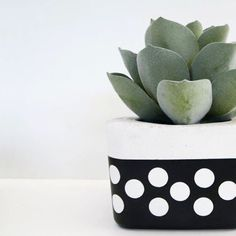 www.nothingbutvintage.com.au Urban Decor concrete planters, Tealights, bowls, office stationary & stools in metallic, pastel, geometric, marble, polka dots, bright colour & monochrome. Concrete Planters, Planter Pots, Urban Decor, Paint Finishes, Tea Lights, Monochrome, Succulents, Pastel, Interior Design
