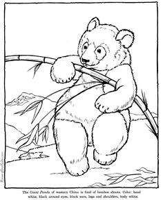 Coloring of Page Realistic Zoo Animals | Giant Panda coloring pages - Zoo animals