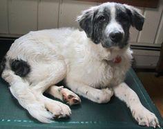 Carolina Adopted January, 2014
