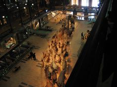 """ Big exhibit is a procession of taxidermied animals Noah's-Ark style. Rue Mouffetard, Paris, City Lights, Natural History, Sorbonne, France, Plants, Nature Study, Paris France"