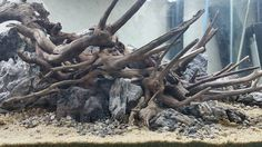 #Hardscape  #driftwood and #stones