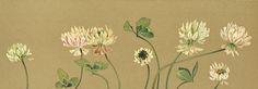 Lilias Trotter. Trifolium repens.