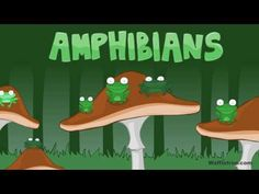 Toad, Frog, Pollywog - Amphibians Kids Song recommended by Charlotte's Clips. I can't wait for the kids to see this when we read 'Frog and Toad'. 1st Grade Science, Kindergarten Science, Elementary Science, Science Classroom, Teaching Science, Science For Kids, Science Activities, Preschool, Science Videos