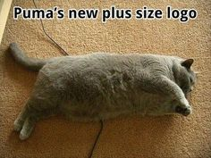 Funny Pictures (42 Pics)