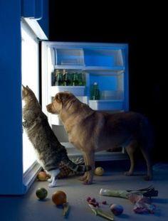 A1/C2. ¿Tienes mascotas? ¿Por qué? ¿Qué ventajas e inconvenientes crees que tiene tener animales en casa?