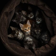 gang of cats . one of our cats was found in a box of kittens on the side of a busy road, and he's a ginger Cute Cats And Kittens, I Love Cats, Cool Cats, Kittens Cutest, Pretty Cats, Beautiful Cats, Animals Beautiful, Beautiful Images, Baby Animals