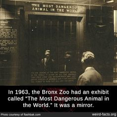 """In the Bronx Zoo had an exhibit called """"The Most Dangerous Animal in the World."""" It was a mirror. Wow Facts, Wtf Fun Facts, True Facts, Random Facts, Bronx Zoo, Save Our Earth, Dangerous Animals, Deep Truths, Daily Facts"""