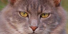 cat cat 7