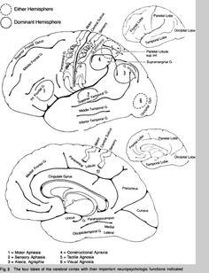 syndromes:  aphasia, alexia, agraphia, apraxia, agnosia