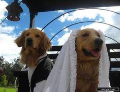 noenga.com :(c) Williemorales (COLOMBIA) :: Matrimonio :: Figura : Realista : Fotografia : Color : Unidos para la eternidad, viviendo el presente