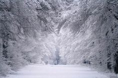Snow forest in Hoekelum, Bennekom, Netherlands