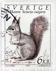 SWEDEN - CIRCA 1992  a stamp printed by SWEDEN shows Squirrel, Sciurus Vulgaris, Wild animal, circa 1992