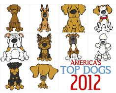 The Top 10 Dog Breeds of 2012, as ranked by the American Kennel Club, have been announced.    Once again the Labs top the list …. Here are the top 10:    1. Labrador Retriever  2. German Shepherd Dog  3. Golden Retriever  5. Bulldog  6. Yorkshire Terrier  7. Boxer  8. Poodle  9. Rottweiler  10. Dachshund