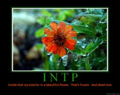 I found this about INTPs and thought you'd get a kick out of it since i killed them for you :) the colder side of INTP :/