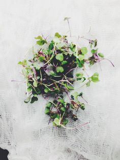 #foodphotography #microgreens #foodstyling