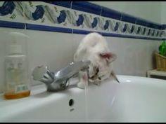 ENTRA AQUÍ >>> para descubrir las MEJORES FOTOS e IMÁGENES de GATOS Bonitos y Graciosos!! Nuestros GATITOS hacen locuras que te dejarán sin aliento y... Cats, Funny Animal Humor, Gatos, Kitty, Cat